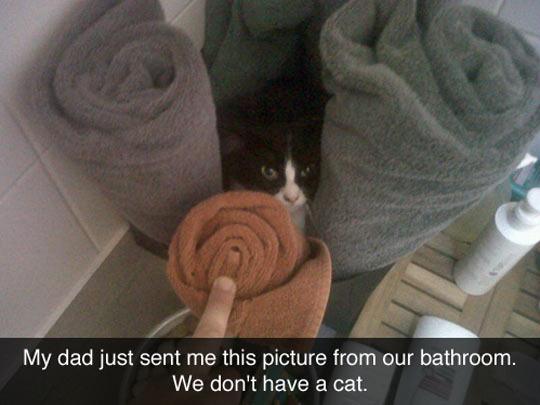 funny-bathroom-cat-hidden-towels