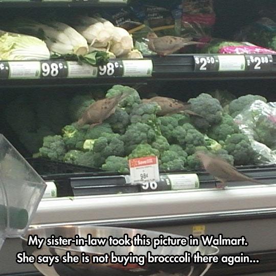 funny-bird-vegetables-shelf-store