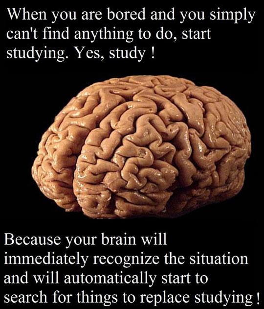 funny-brain-bored-study-advice