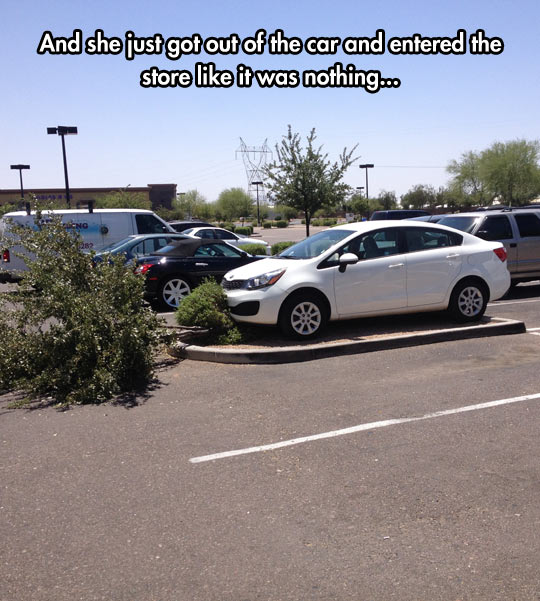 funny-car-tree-crash-parking