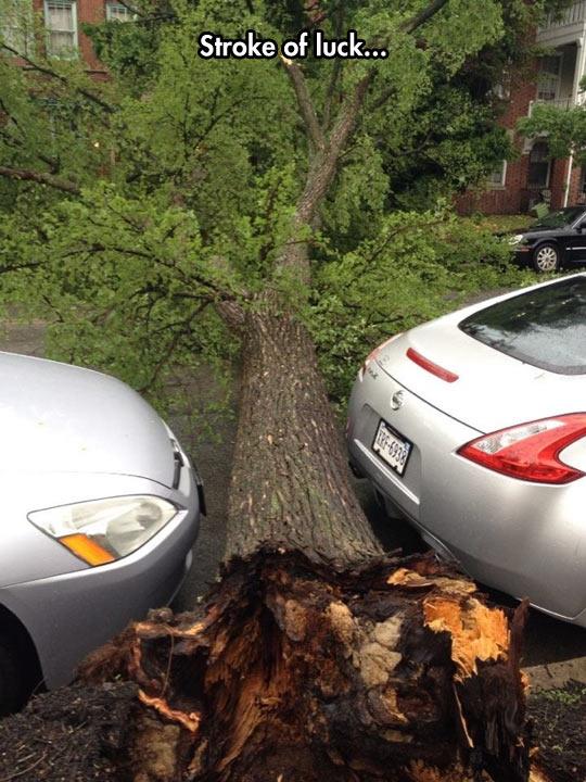 funny-car-tree-fallen-luck