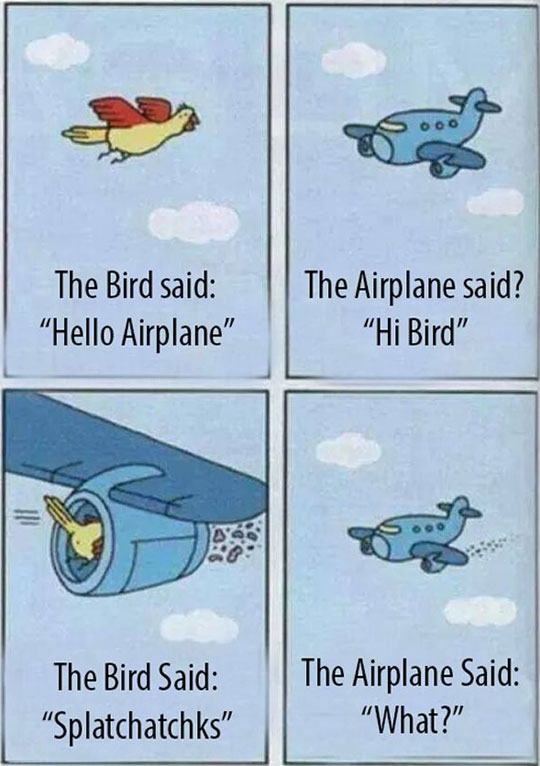 Bird And Plane Become Friends