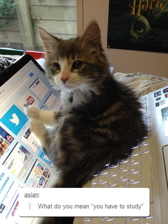 funny-cat-PC-notebook-lay-down