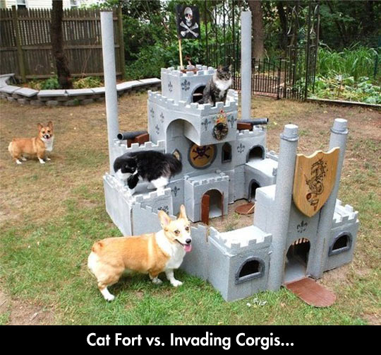 funny-cat-corgi-castle-fort