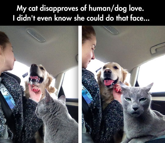 funny-cat-dog-car-love-disapprove