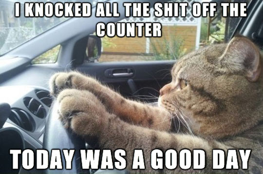 funny-cat-driving-car-quote