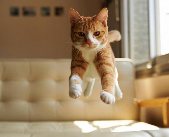 Cat In Mid-Air