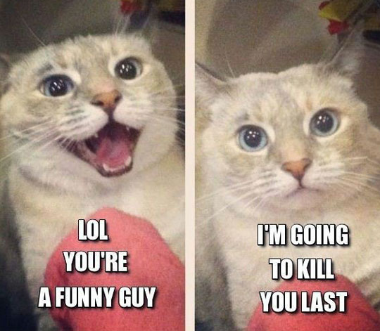 Mad Cat Loves You
