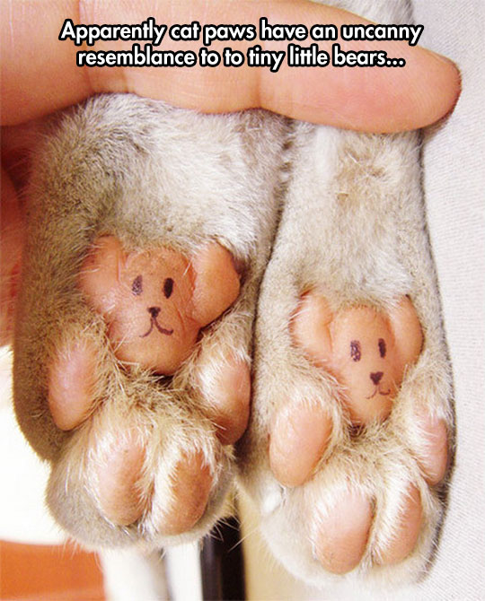 Tiny Little Bears