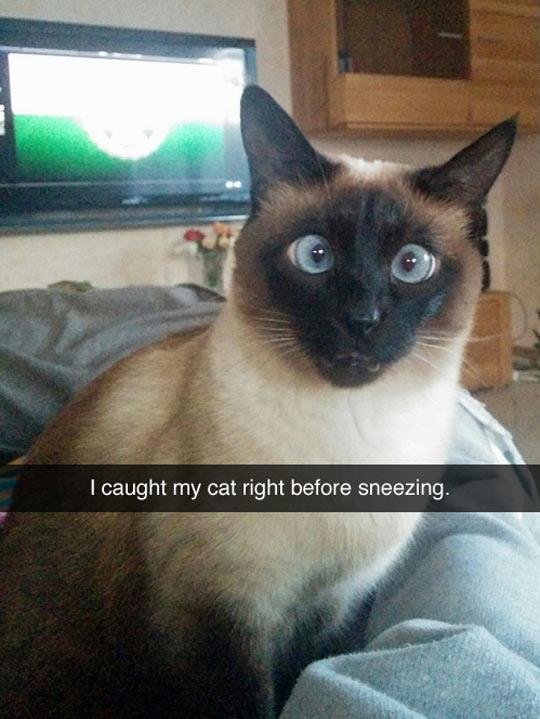 funny-cat-sneezing-face-cross-eyes