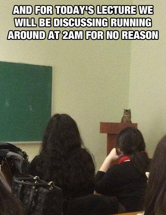 funny-cat-teacher-class-lesson
