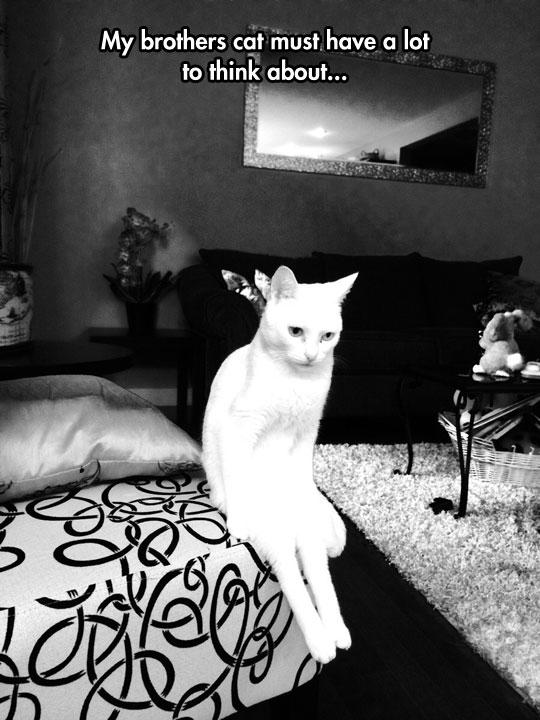That Kitty Has Seen Some Weird Stuff