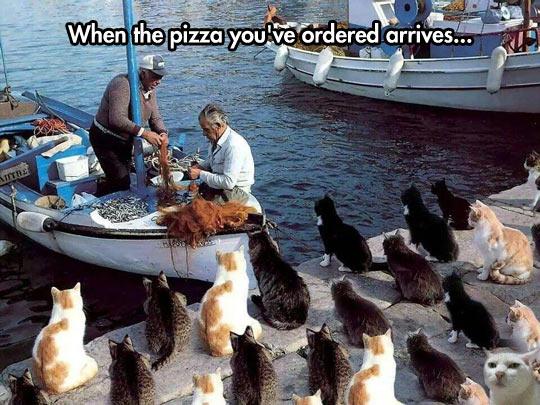 funny-cats-ocean-boat-fishermen