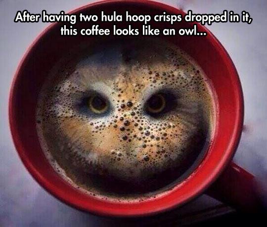 Owl In Coffee