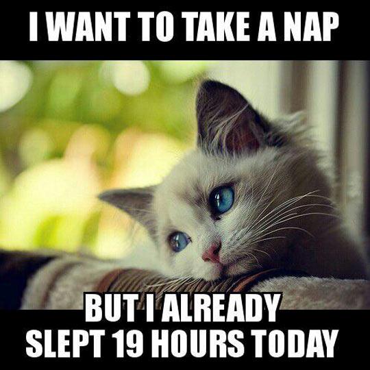 funny-cute-cat-wants-sleeping