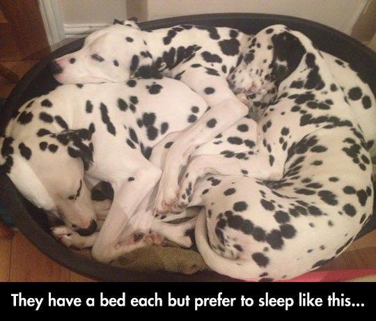 Sleeping Together Is Always Better