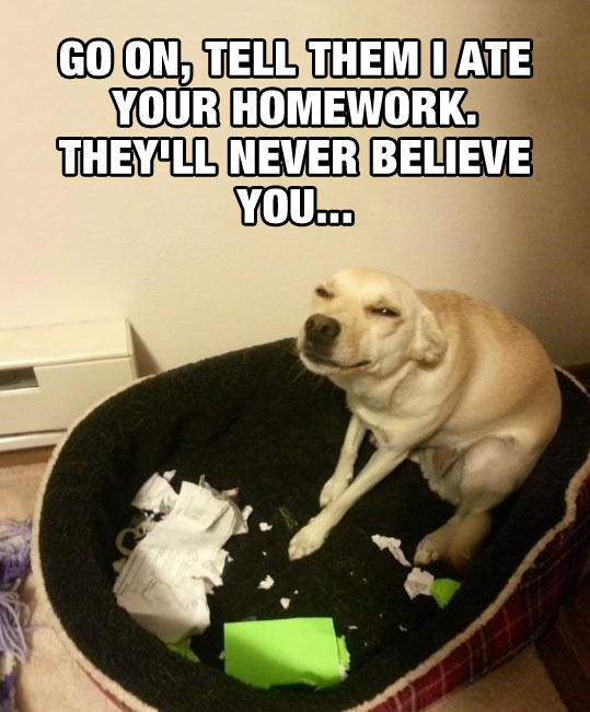 funny-dog-ate-homework-face