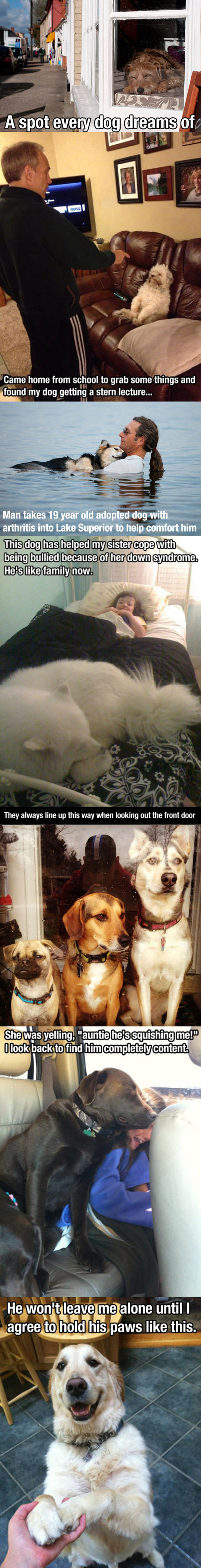 funny-dog-bus-cute-animals-awesome