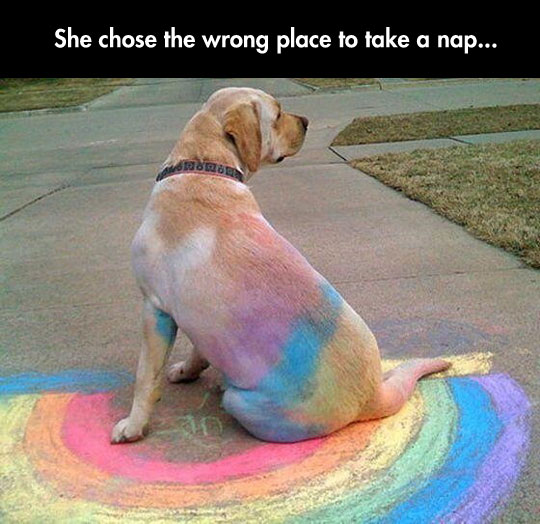 funny-dog-chalk-color-back