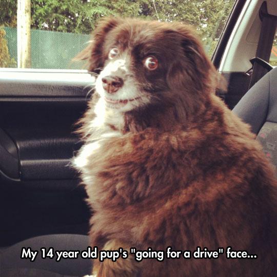 funny-dog-face-car-ride