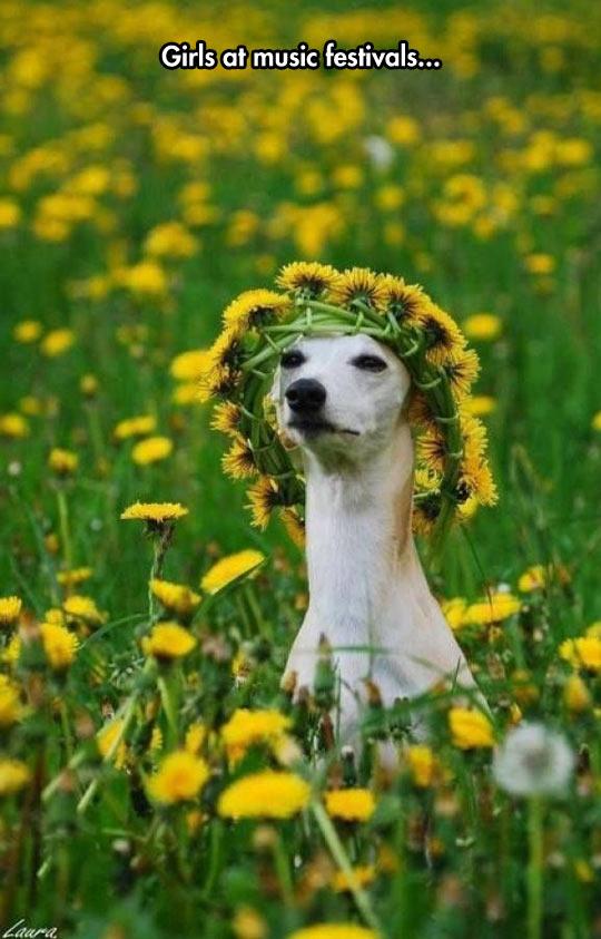 Girls Love Flower Headbands