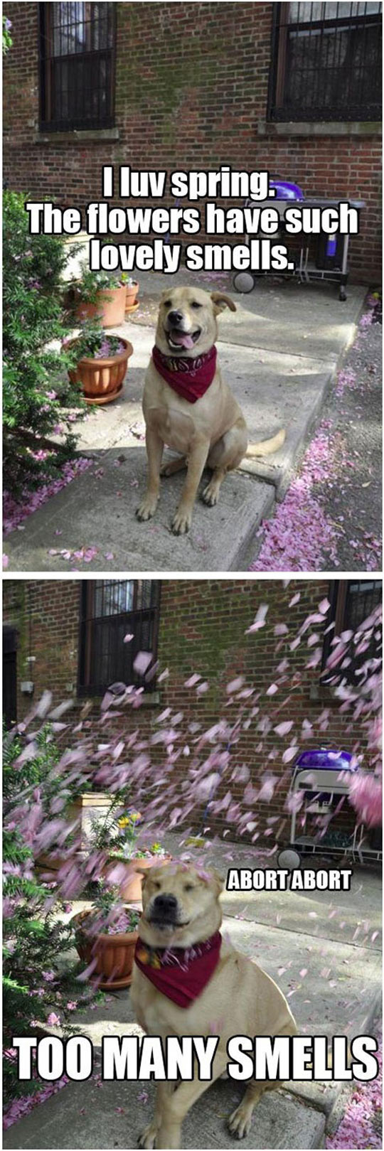 funny-dog-flowers-springs-smells