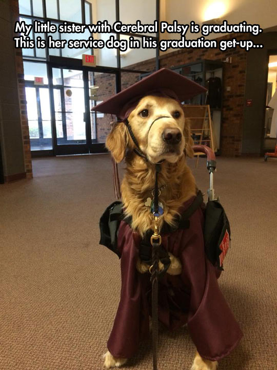 funny-dog-graduation-sister-palsy