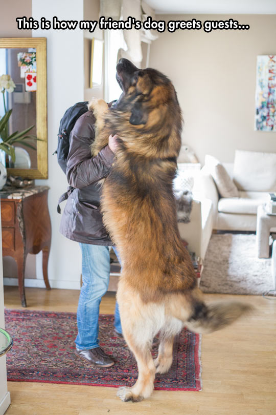 funny-dog-greeting-guest-home