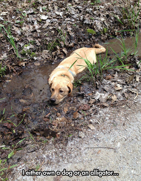 funny-dog-mud-water-dirty