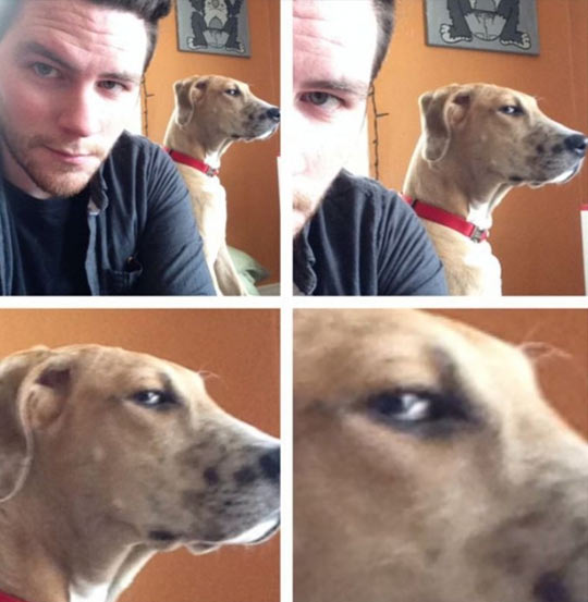 funny-dog-owner-eyes-bad