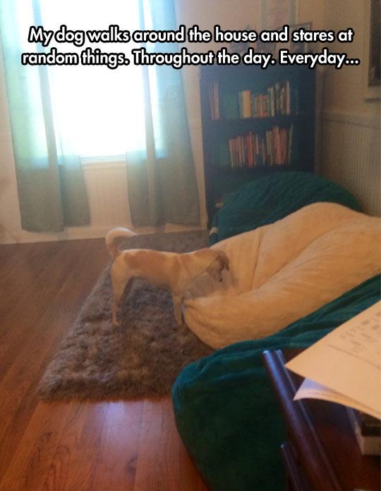 Very Curious Dog
