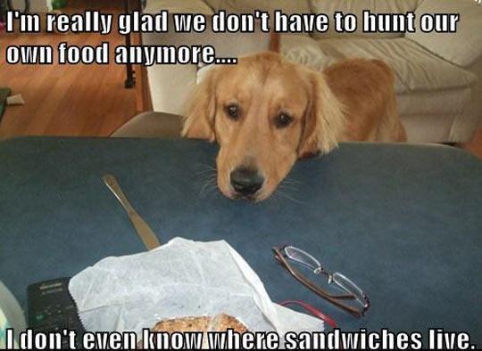 Dog Thoughts On Food