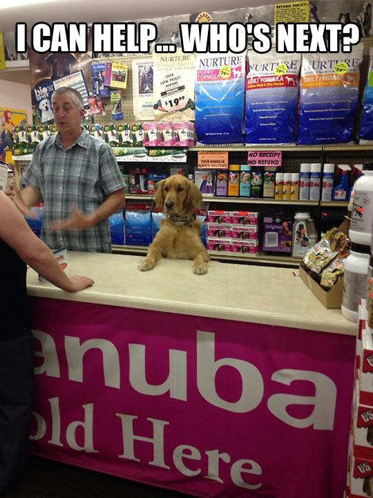funny-dog-shop-helping-owner-1