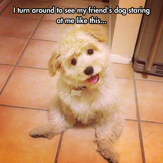 funny-dog-smile-sitting-weird-pose