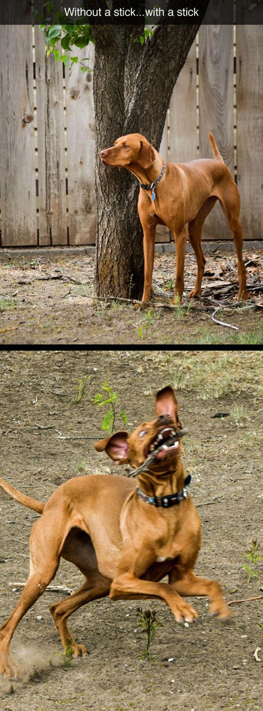 funny-dog-stick-proud-ridiculous