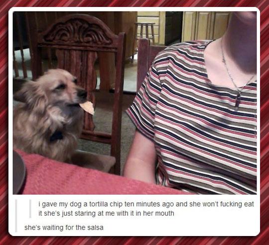 funny-dog-tortilla-chip-salsa-eating