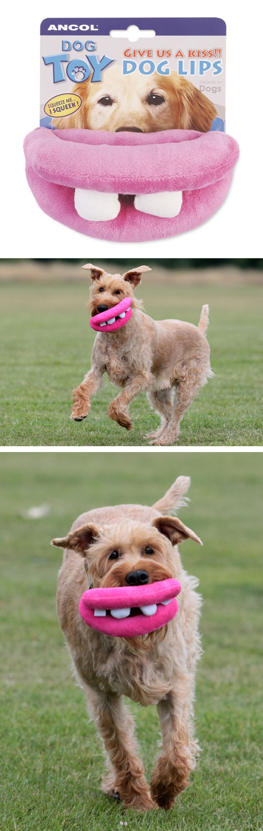 funny-dog-toy-mouth-lips