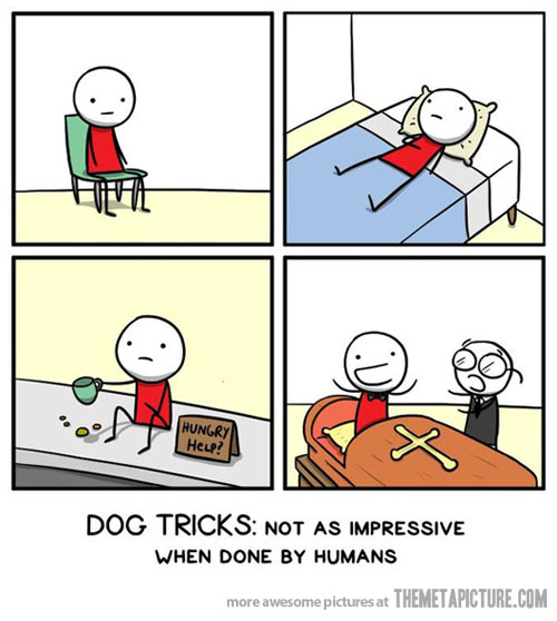 funny-dog-tricks-comic-sleeping-sitting