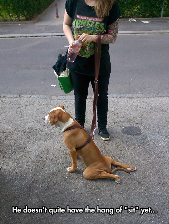 funny-dog-wrong-sit-street-owner
