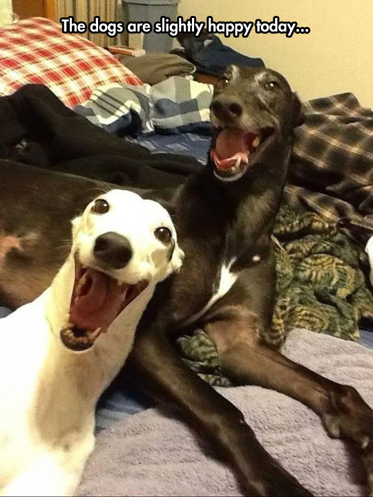 Greyhounds Have The Happiest Smiles