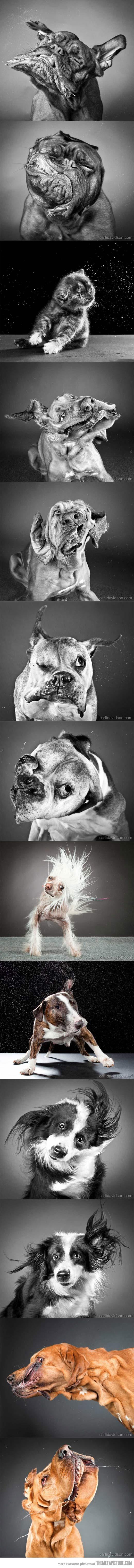 funny-dogs-shake-pics-compilation