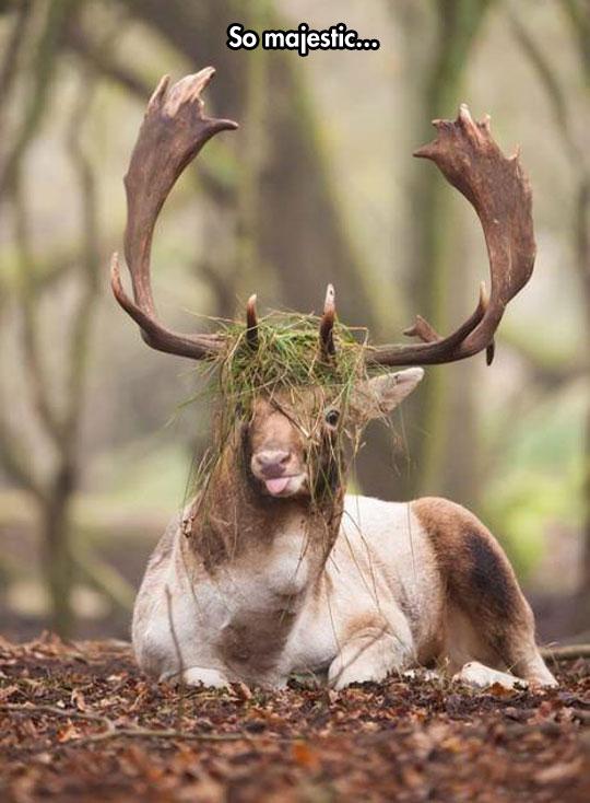 funny-dumb-moose-antlers-grass