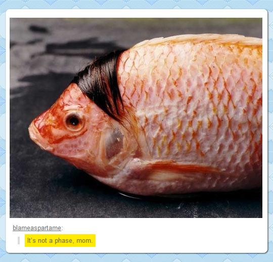 Seems a Little Bit Fishy If You Ask Me