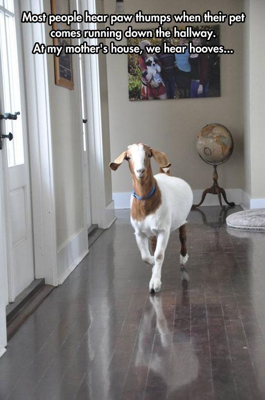 Goat Simulator: Home Edition