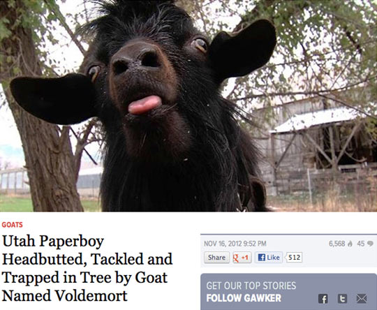 funny-goat-paperboy-article-news
