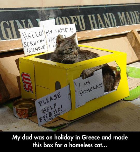 Homeless Cat Box