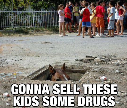 funny-horse-hiding-kids-sell