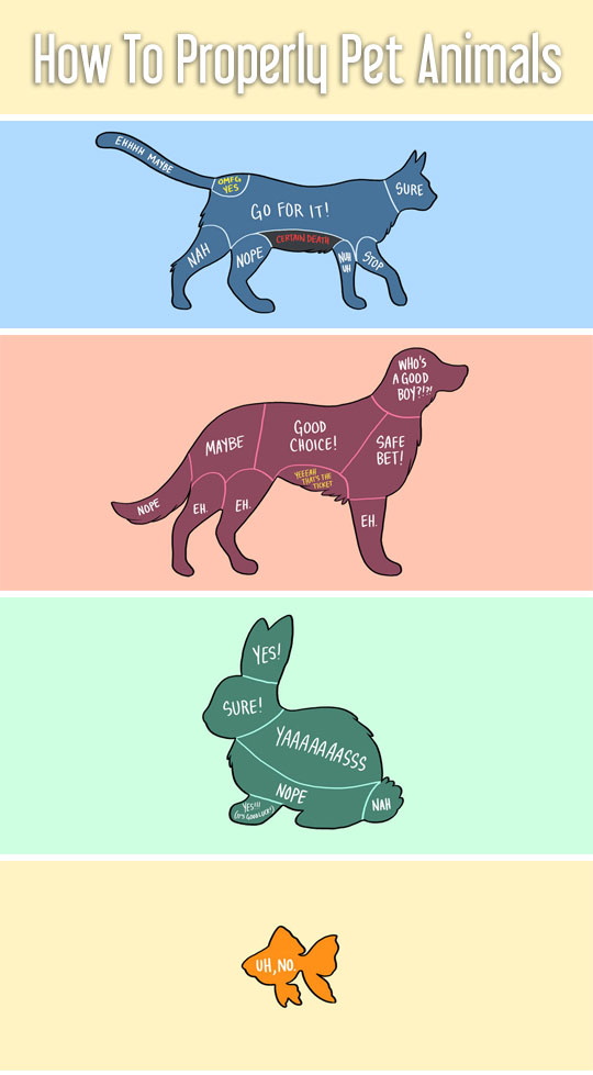 How To Properly Pet Animals