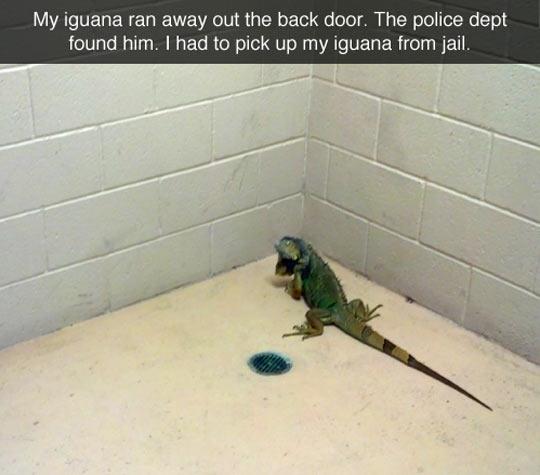 Freeing a Prisoner