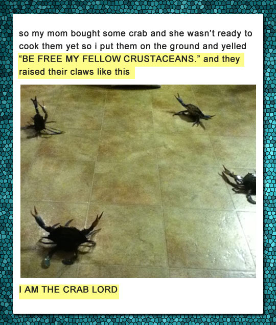 funny-kid-crab-lord-cooking